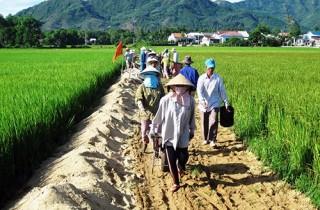 BIDV được chỉ định làm ngân hàng phục vụ dự án nông nghiệp do ADB tài trợ