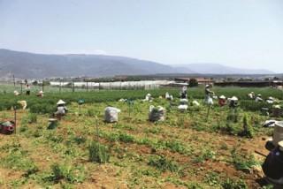 Để nông thôn mới bền vững