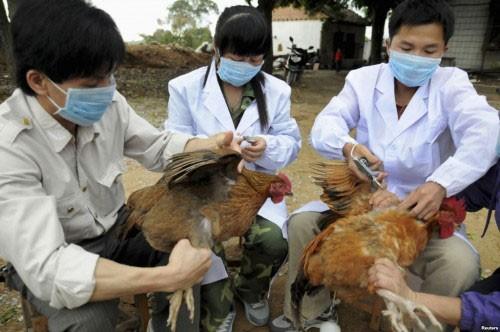 Sử dụng chất cấm trong chăn nuôi có thể bị phạt tù 20 năm