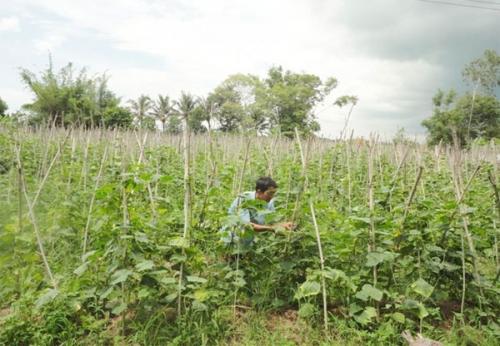 NHCSXH tích cực giúp hộ cận nghèo trên địa bàn Bạc Liêu thoát nghèo bền vững