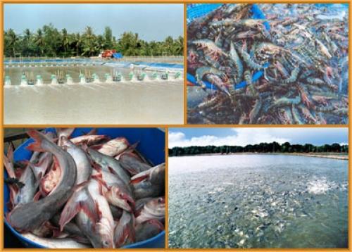 Bén duyên với nuôi trồng thủy sản