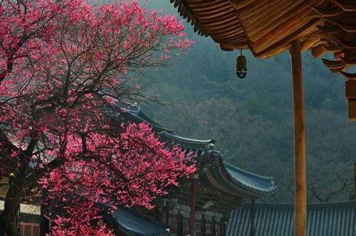 Hàn Quốc đấy mạnh thu hút du khách Việt