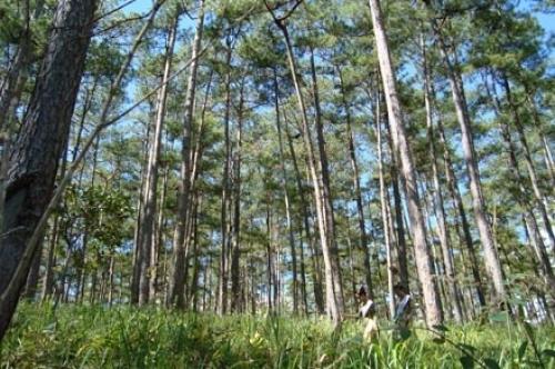 Tăng cường quản lý và sử dụng rừng, đất rừng tự nhiên