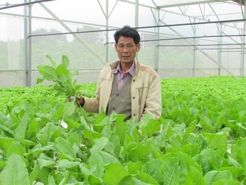 Đà Nẵng đầu tư nhiều nguồn lực cho nông nghiệp công nghệ cao