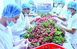 Chủ động đưa nông sản vào siêu thị ngoại