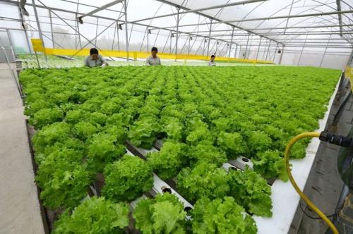 Kênh thông tin minh bạch các sản phẩm nông nghiệp