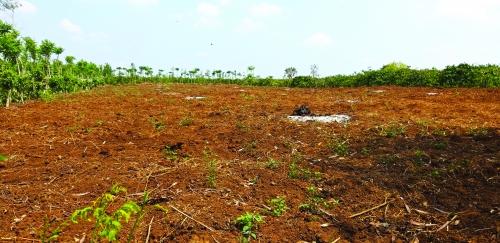 Khó thu hồi đất rừng bị lấn chiếm