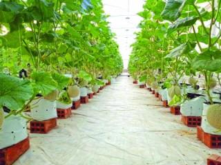 Hiện đại hóa ngành nông nghiệp: Đẩy nhanh ứng dụng IoT