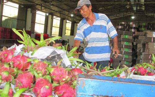 Tiêu chuẩn hóa nông sản xuất khẩu