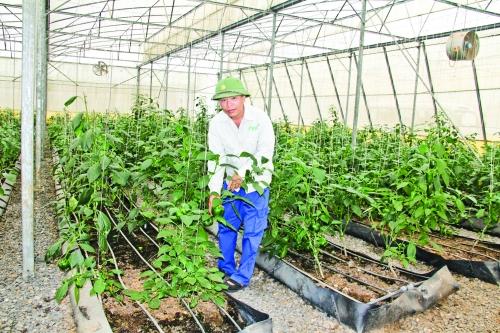 Ưu tiên phát triển nông nghiệp công nghệ cao