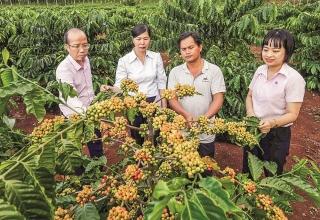 Vốn vay ưu đãi: Động lực cho công cuộc giảm nghèo ở Gia Lai