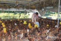 Người chăn nuôi gặp khó