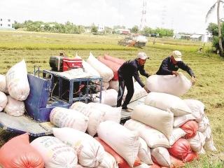 Xuất khẩu gạo hợp lý để đạt mục tiêu kép