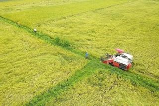 Thủ tướng Chính phủ chính thức cho phép xuất khẩu gạo trở lại