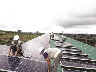 Điện mặt trời phủ kín đất trang trại
