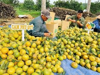 Thêm lối ra cho nông sản Việt
