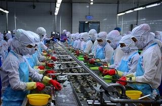 TP.Hồ Chí Minh: Tiến độ điều tra kinh tế doanh nghiệp quá chậm