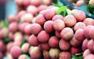 Vụ vải thiều năm 2015 ước sản lượng khoảng 200.000 tấn quả tươi