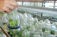 Đẩy mạnh cho vay nông nghiệp ứng dụng công nghệ cao