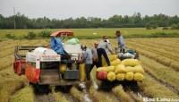 Dư nợ cho vay lúa gạo ước đạt 34.400 tỷ đồng