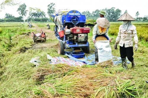 Xuất khẩu gạo chưa vội mừng