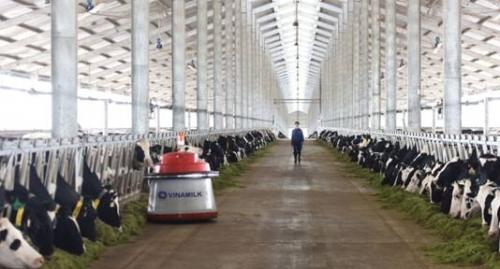 Vinamilk lên tiếng về việc một hộ chăn nuôi đổ sữa tại Nghệ An