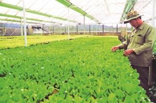 Bảo hiểm nông nghiệp cần tầm dài hạn