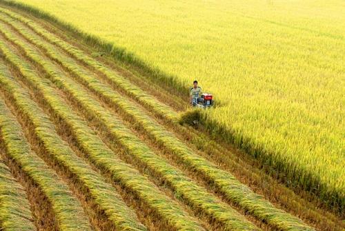 Đẩy mạnh thu hút vốn phát triển hợp tác xã Việt Nam