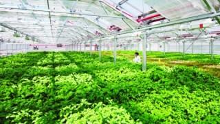 Đà Nẵng: Quy hoạch 2 vùng nông nghiệp công nghệ cao