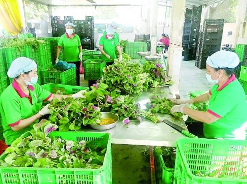 """Tư duy """"ăn xổi"""" đang làm khó nông sản Việt"""