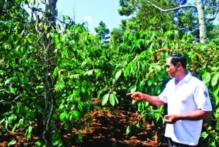 Cần thay đổi tư duy sản xuất độc canh