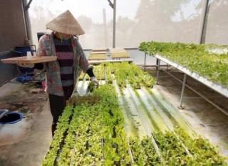Sơ chế nông sản tại nguồn - lợi cả đôi đường