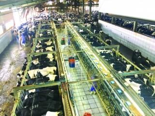 Giải pháp đẩy mạnh xuất khẩu sữa