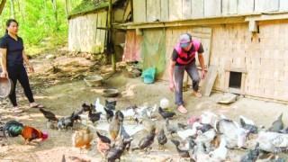 Góp sức xóa nghèo ở miền Tây xứ Nghệ