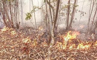 Cần chủ động phòng ngừa cháy rừng