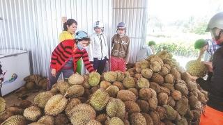 Nguy cơ nông sản Việt thất sủng ở ASEAN