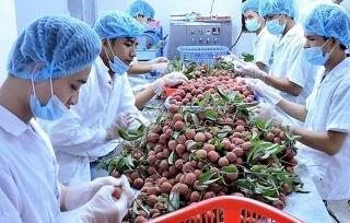 Thị trường Nhật tăng cường dùng hàng Việt
