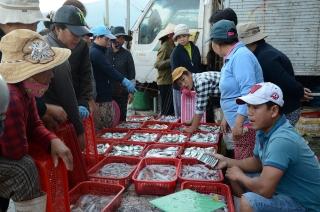 Nâng cao hiệu quả khai thác và tiêu thụ thủy sản
