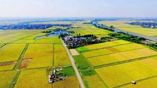 Đồng tình với chính sách miễn thuế sử dụng đất nông nghiệp