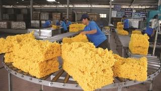 Tín hiệu tích cực từ xuất khẩu cao su