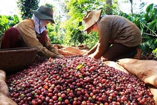 Tín hiệu vui đối với xuất khẩu nông sản