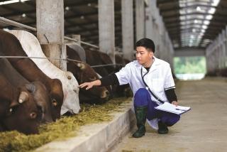 Vốn ngân hàng gắn kết chuỗi sản xuất nông sản