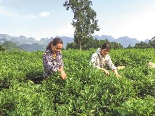 Liên kết để phát triển tam nông bền vững