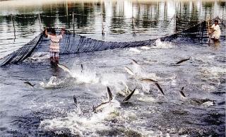Áp dụng công nghệ để phát triển nuôi trồng thủy sản
