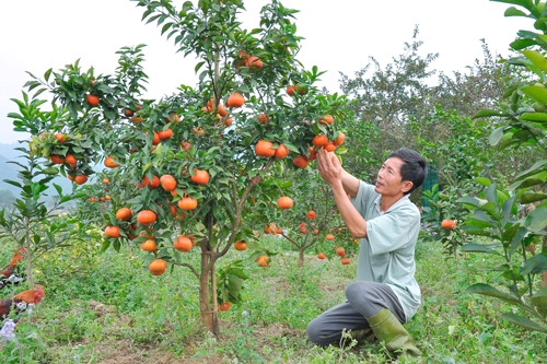Trả lời kiến nghị của DN về việc hỗ trợ vốn đầu tư dự án trồng cây ăn quả