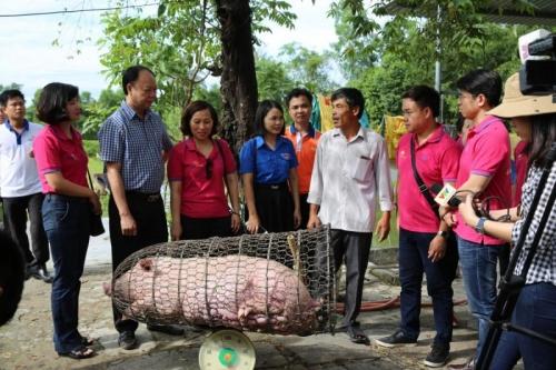 """LienVietPostBank tiếp tục """"Giải cứu đàn lợn"""" tại Quảng Trị"""