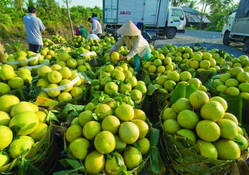 Làm gì ổn định đầu ra cho nông sản?
