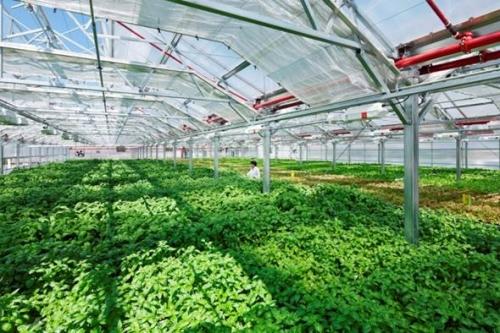 Doanh nghiệp nông nghiệp cần làm gì trước xu thế Blockchain?
