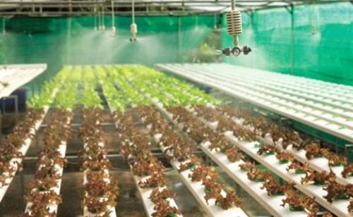 Công nghệ tạo lực bẩy cho nông sản Việt Nam