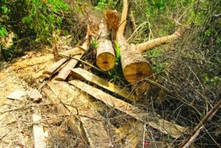 Mạnh tay hơn để bảo vệ rừng